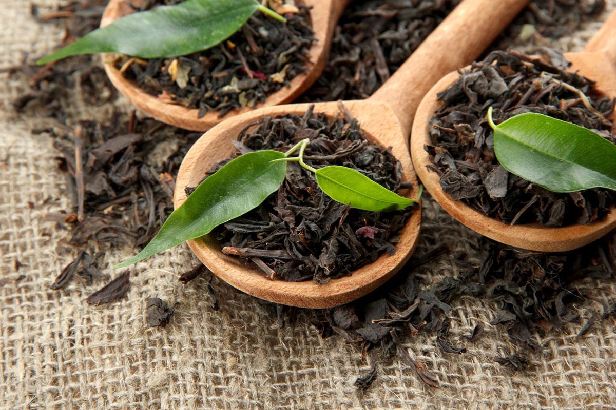 Фото чайных листьев